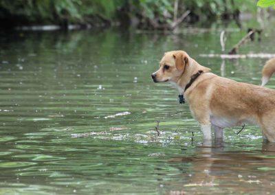 Hundebadespaß